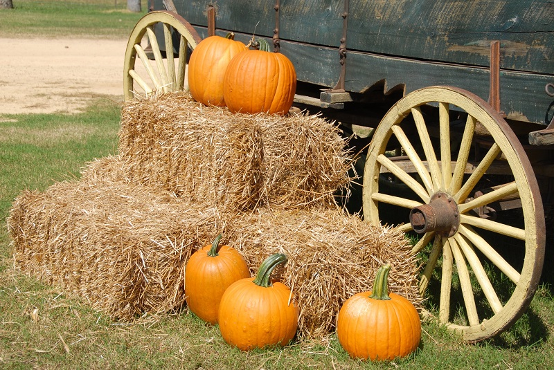 Your Event Party Rentals has what you need to rent for any of your fall events including Halloween or Thanksgiving.